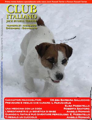 Calaméo Club Italiano Jack Russell Terrier N21 2018