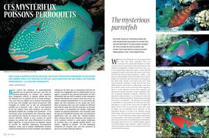 Air Tahiti Magazine, les Poissons Perroquet.