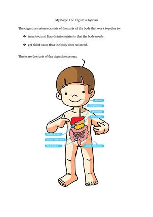 Human Body Introduction To The Digestive System