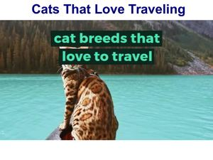 Cats That Love to Travel