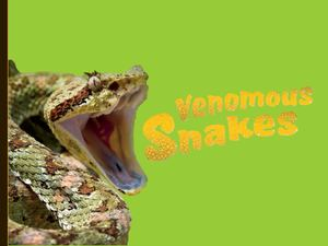 Venomous Snakes Level Out Workshop N °1