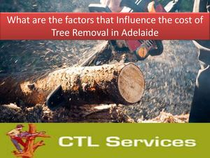 What Are The Factors That Influence The Cost Of Tree Removal In Adelaide