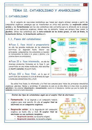 Calaméo T 12 Catabolismo Y Anabolismo 18 19