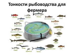 Тонкости рыбоводства для фермера